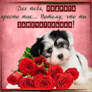 Картинка для подруги с милой собачкой