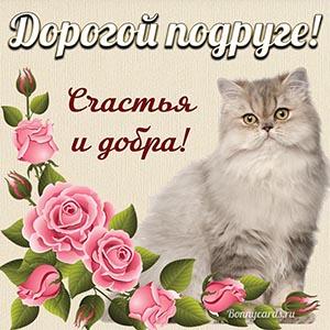 Красивая картинка с котом и розами дорогой подруге