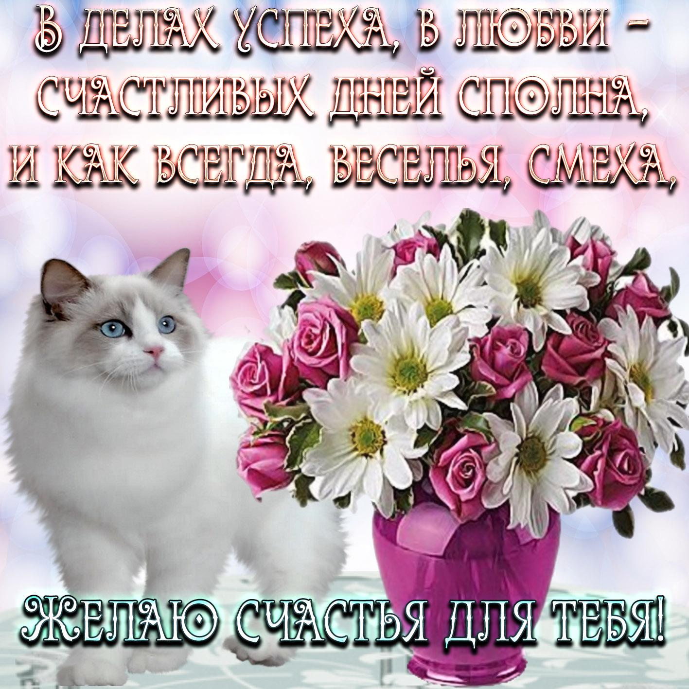 Картинка с котиком желающим счастья