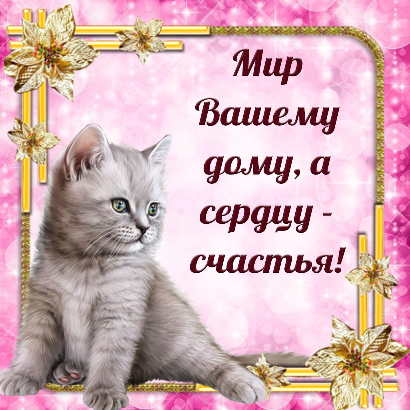 Картинка с котиком в красивой рамочке и пожелание счастья
