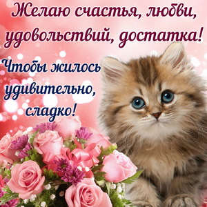 Милый котёнок желает счастья