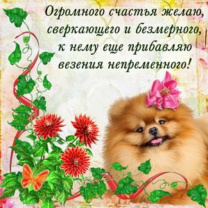 Открытка с забавной собачкой желающей счастья