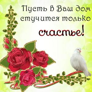Картинка с голубем и красными розами