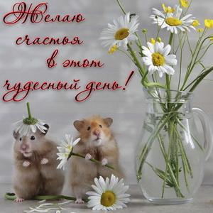 Картинка с ромашками и пожеланием счастья