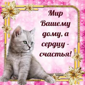 Картинка с котиком в красивой рамочке