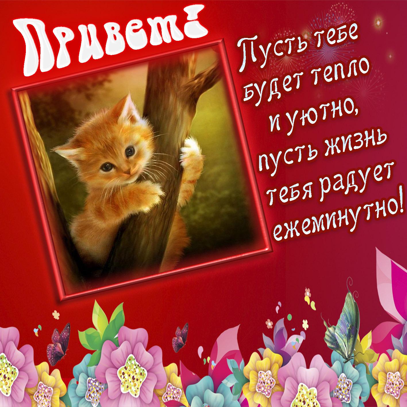 Открытка - котёнок в рамочке шлёт Вам привет