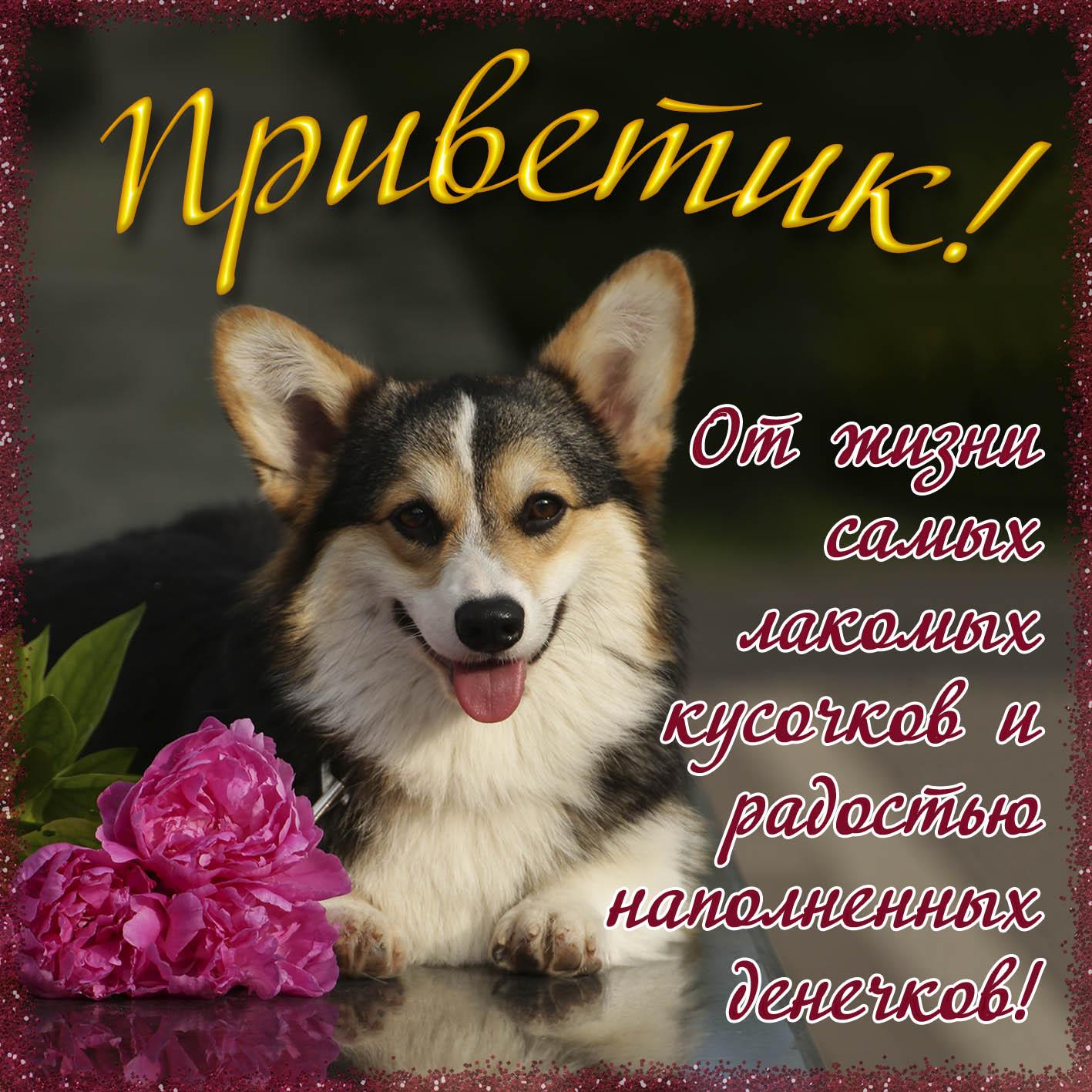 Открытка - милая собачка с цветами шлёт Вам приветик