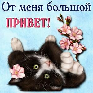 Забавный котик шлет привет