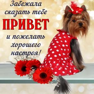Пожелание и привет от собачки