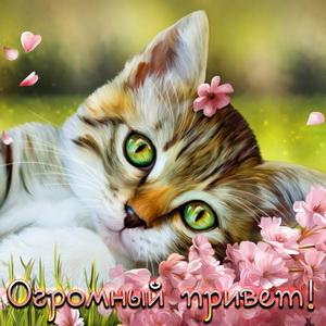 Котик передает огромный привет