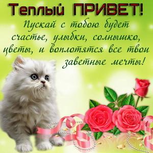Котёнок с цветами и тёплым приветом