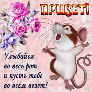 открытка привет