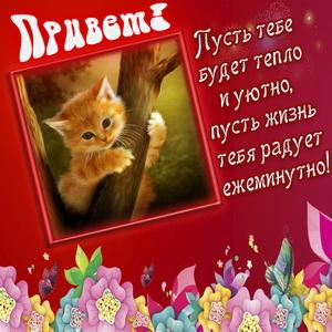 Котёнок в рамочке шлёт Вам привет