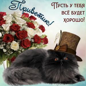Котик в шляпе шлёт привет и букетик