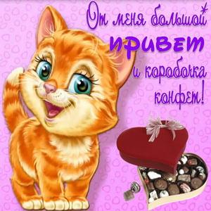 Весёлый котёнок шлёт привет и конфеты