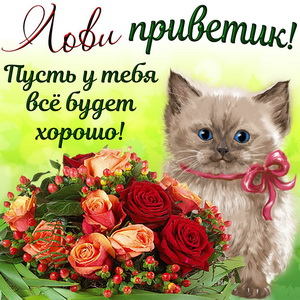 Милый котёнок с букетом и приветиком