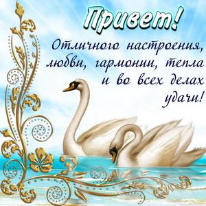 Открытка с красивым приветом и лебедями