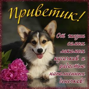 Милая собачка с цветами шлёт Вам приветик