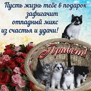 Открытка с розами и приветом от милых котят