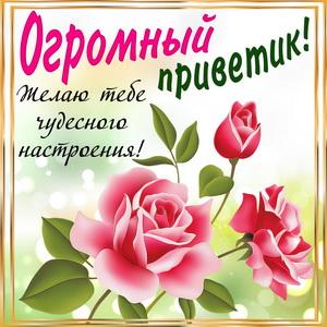 Открытка с розами и огромным приветиком