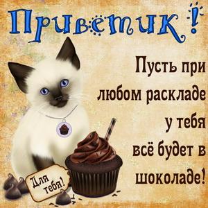 Картинка с приветиком и котом с пироженкой