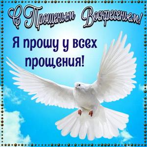 Голубь в рамке на Прощеное Воскресенье