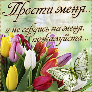 Открытка прости меня с тюльпанами и бабочкой