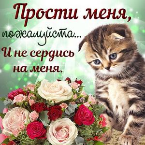 Котик с красивым букетом и просьба простить