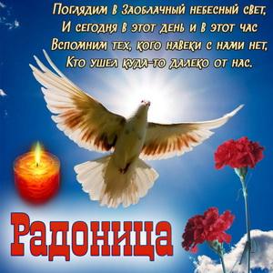 Открытка с голубем и гвоздиками к Радонице