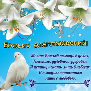 Картинка с голубем и белыми цветами