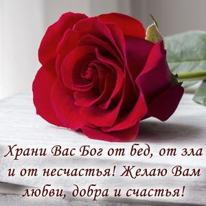 Картинка с красной розой и добрым пожеланием