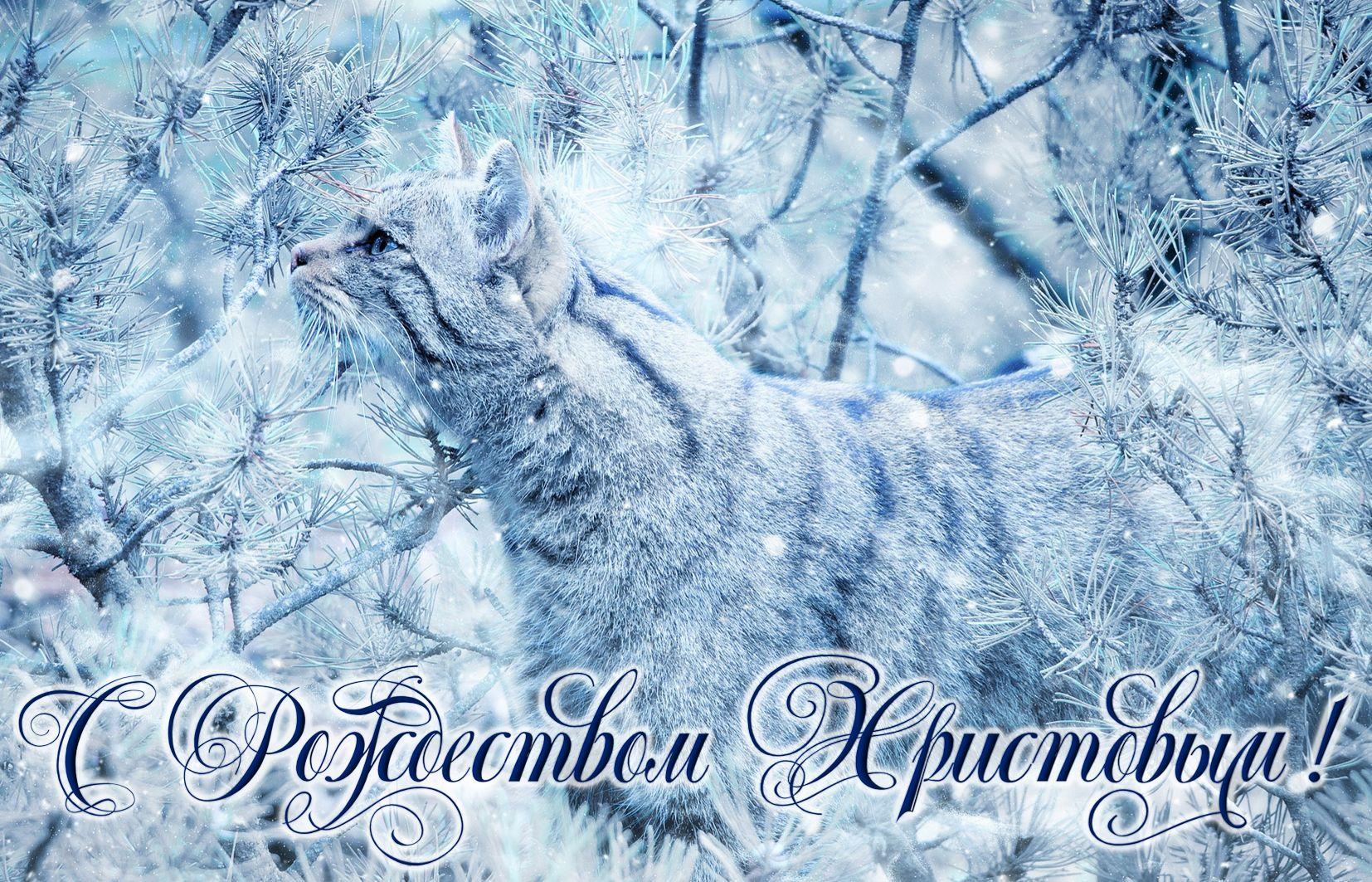 Открытка с Рождеством Христовым - красивый котик в зимнем лесу