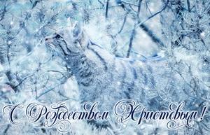 Красивый котик в зимнем лесу
