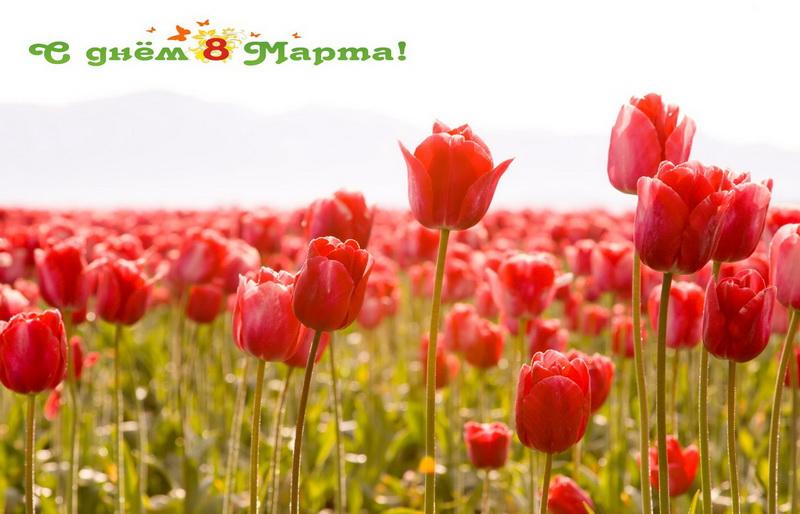 С 8 марта, тюльпаны, поле