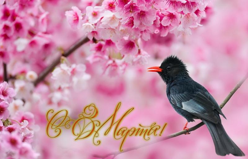С 8 марта, птичка на ветке, цветы