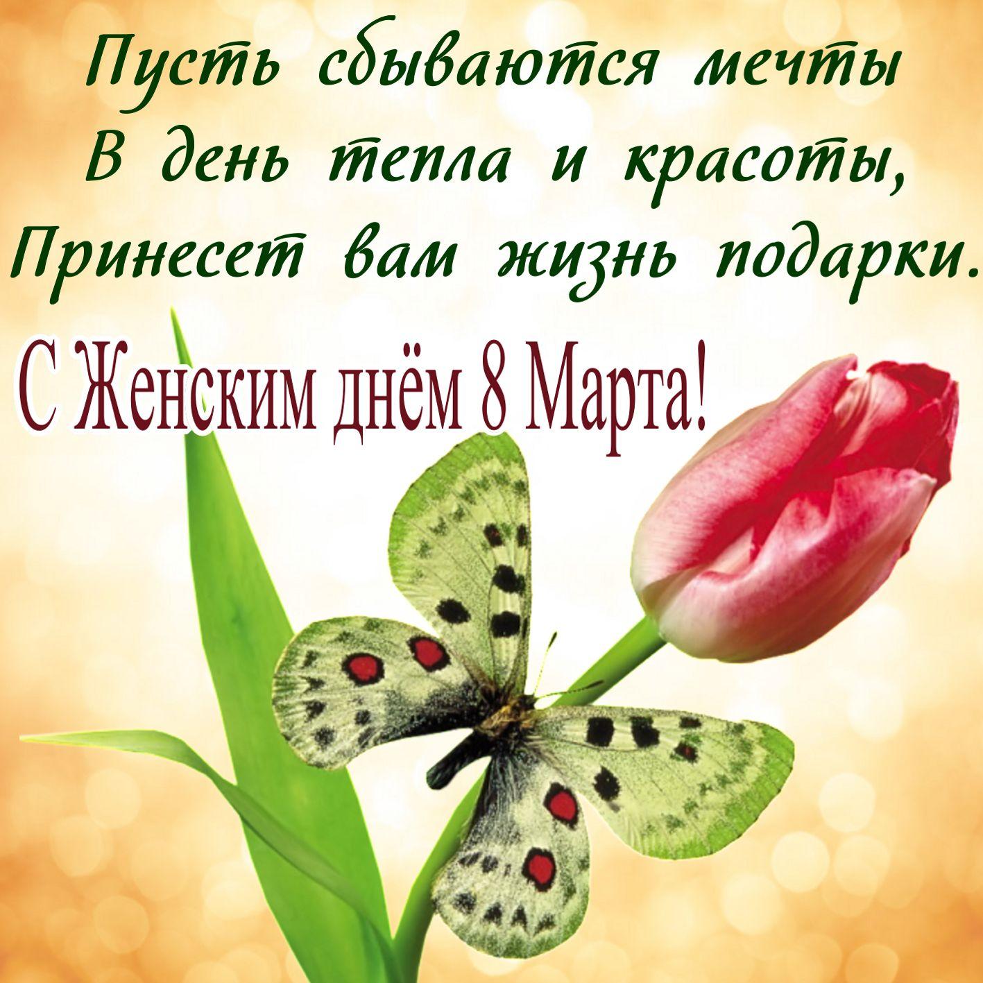Бабочка на цветке к Женскому дню 8 марта