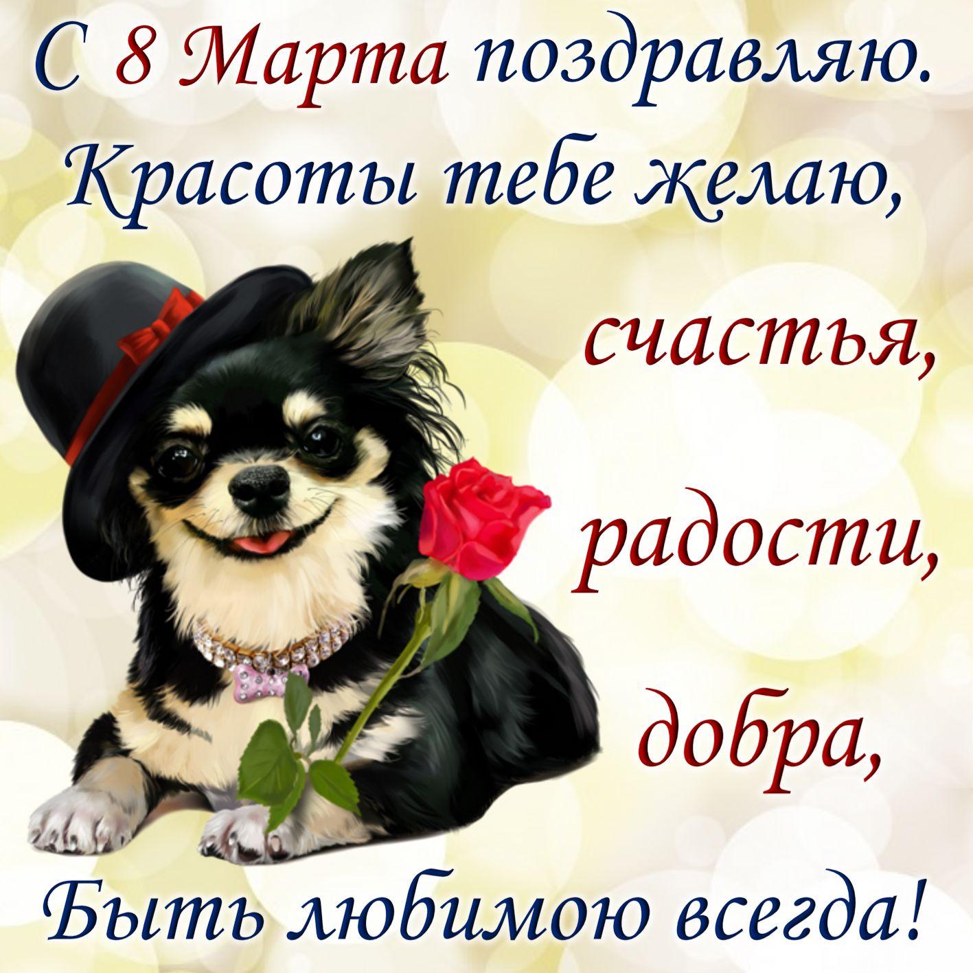 Открытка с 8 марта - собачка в шляпке с красной розой