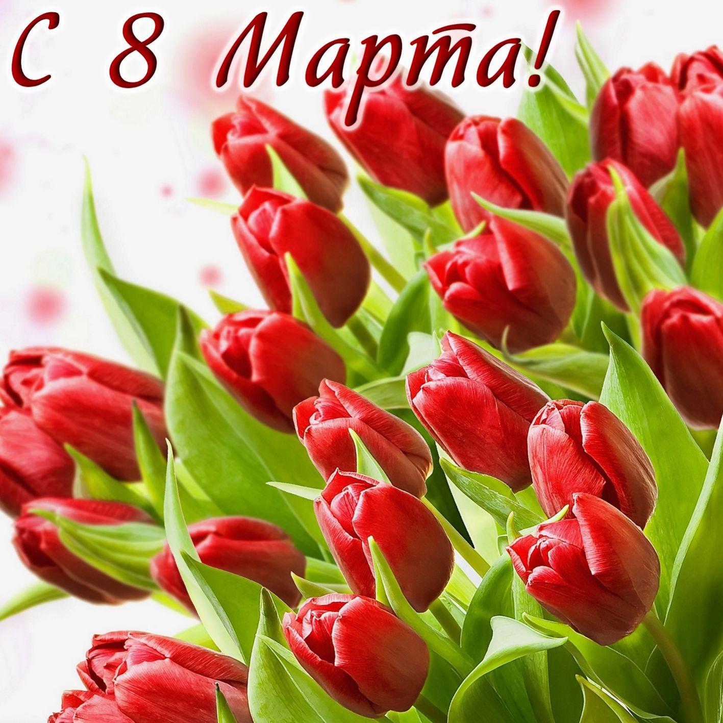 Море красных тюльпанов на 8 марта