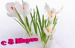 С 8 марта, лилии