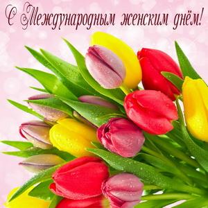 Букет тюльпанов в капельках росы