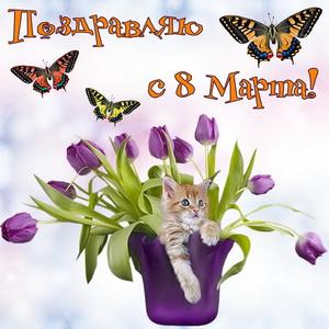 Котик в вазе с цветами на 8 марта