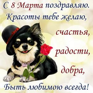 Собачка в шляпке с красной розой