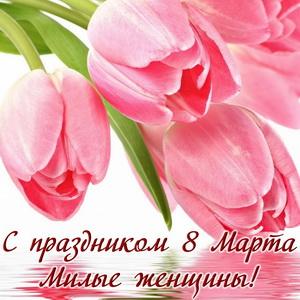 Розовые тюльпаны для милых женщин