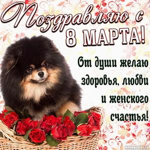 Открытка с милой собачкой и поздравлением на 8 марта