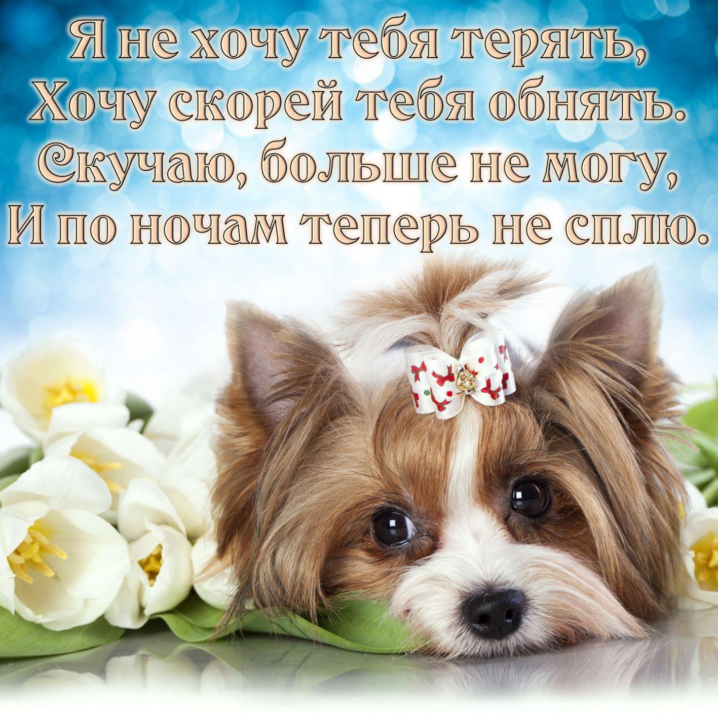 Открытка скучаю - грустная собачка с бантиком