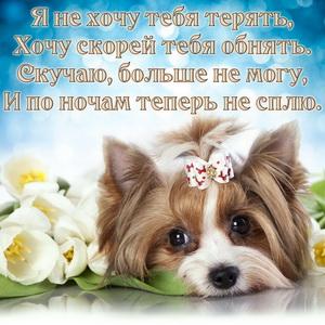 Грустная собачка с бантиком