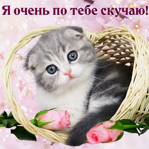 Открытка с котиком в корзинке