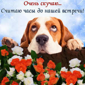 Собачка очень скучает на фоне цветов