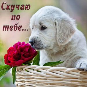 Картинка с белой собачкой и цветком