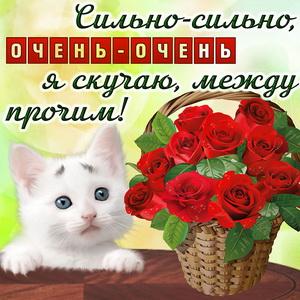 Открытка скучаю с котиком и красными розами